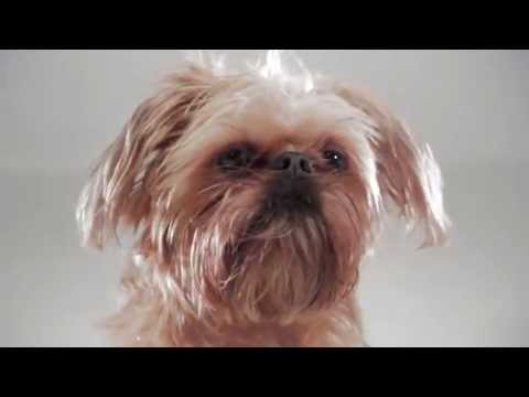The Official / Unofficial BarkBox Commercial