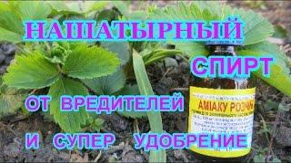 видео Обработка земляники весной от вредителей.