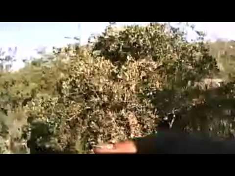 ontagnes dahra Algérie au webcam