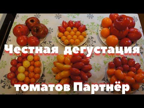 Дегустация томатов от агрофирмы Партнёр 2020г