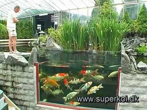 Superkoi butik   havedammen,dk   youtube