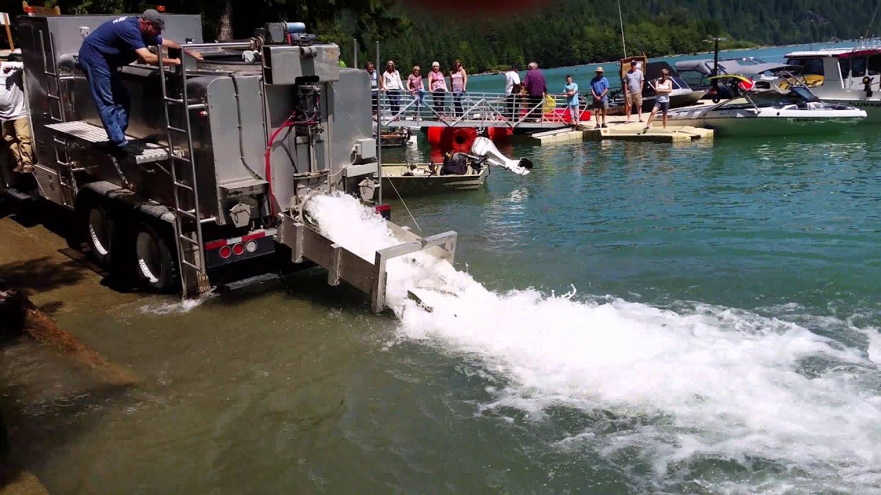 Baker lake sockeye fish taxi