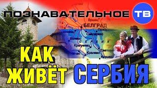 Как живёт Сербия (Познавательное ТВ, Драган Станоевич)