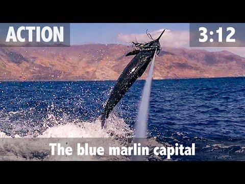 Cape Verde The Blue Marlin Capital
