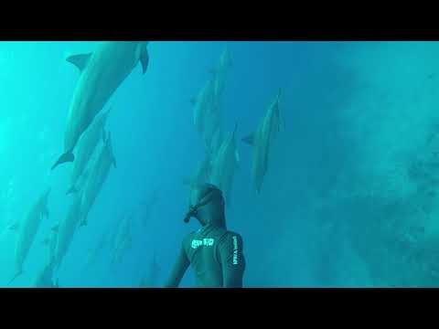 Freediving with huge dolphin pod