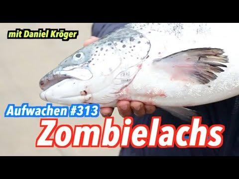 Aufwachen #313: KenFM, Trumps Aufrüstung & Cyberpolizei (Gast: Daniel Kröger)