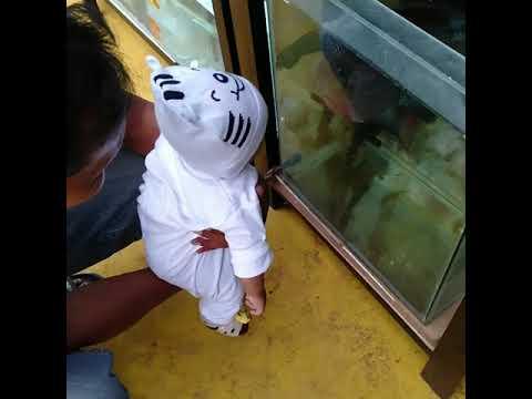 Ayah Bayi Liat Kolam Ikan