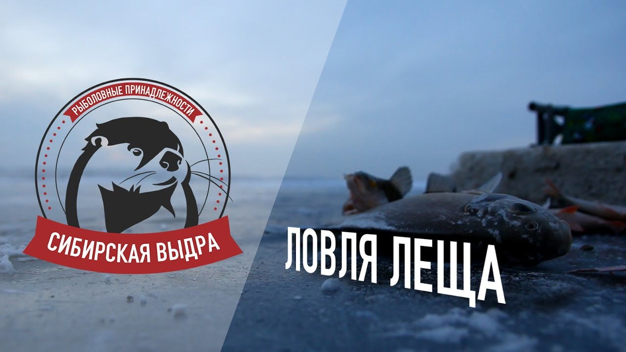 видео ловли леща сверху красноярском водохранилище