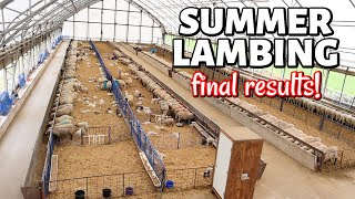 Summer Lambing 2020 | SHARING MY FINAL RESULTS *not great*: Vlog 326