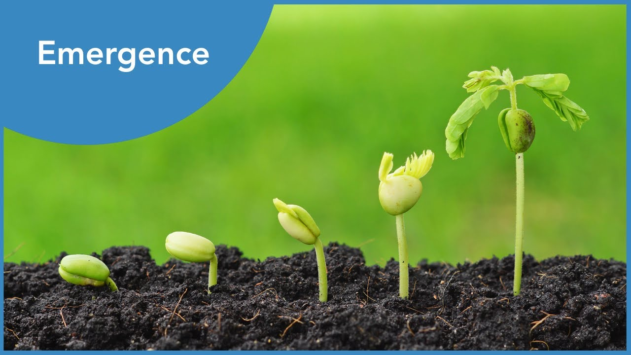 Emergence: Creative Process