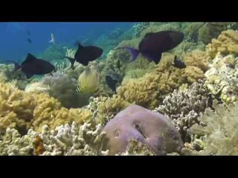 Underwater Scuba Diving; North Sulawesi, Indonesia