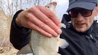 Сразу Лещ с Первого заброса на фидер в реке на течении Фидерная рыбалка на Леща