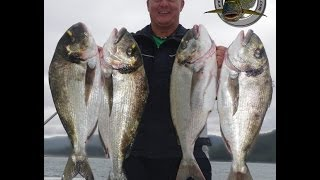 PESCA CUATRO DORADAS GIGANTES fishing peche dorade orata