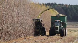 John Deere harvesting Salix, fitted with HSAB's SRC Chipping Head