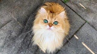 Cat Eyes Like Jewels