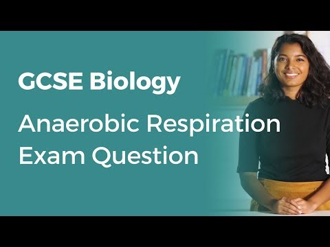 Anaerobic Respiration Exam Question | 9-1 GCSE Biology | OCR, AQA, Edexcel