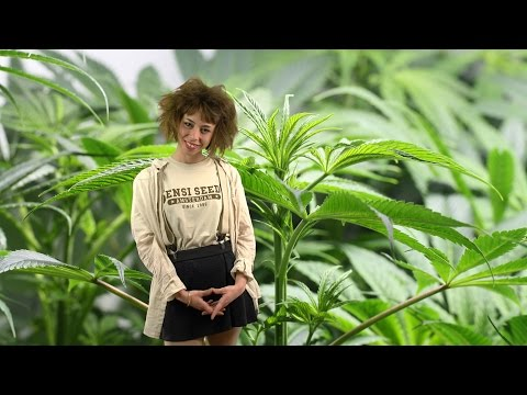 Marihuana Televisión News #45 - Especial Sentencias TRIBUNAL SUPREMO y América Medicinal