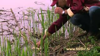 видео Бисерово озеро рыбалка бесплатно на карте