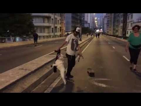 Buddah, the Skateboarding Bulldog
