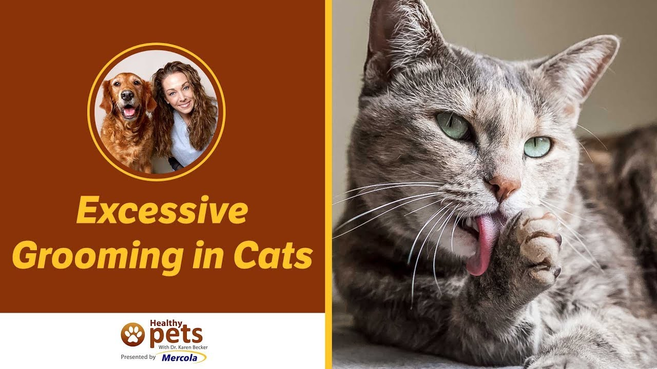 Excessive Grooming in Cats: Psychogenic Alopecia