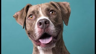 LIVE: Adoptable Dog in New York City - TIBBLE | The Dodo LIVE