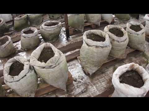 видео: Моя зимняя теплица, необычный способ выращивания !)