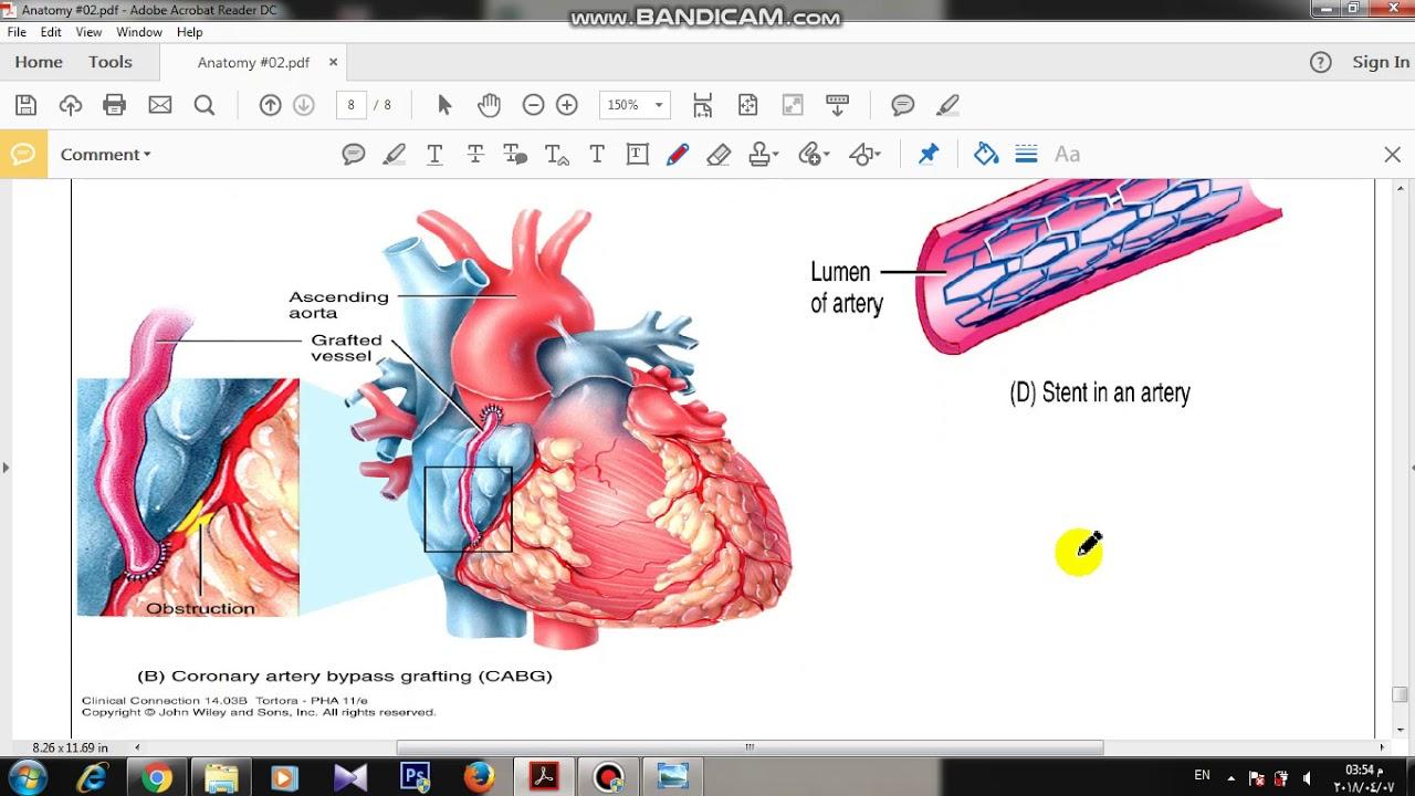 Final Anatomy 2 part 7 - YouTube