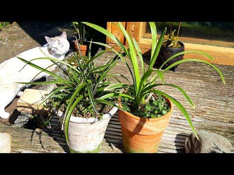 Мини ЦИМБИДИУМЫ. Как растут в новом субстрате эти орхидеи.