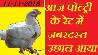 high rise poultry rate today in all over india including punjab and delhi murga mandi