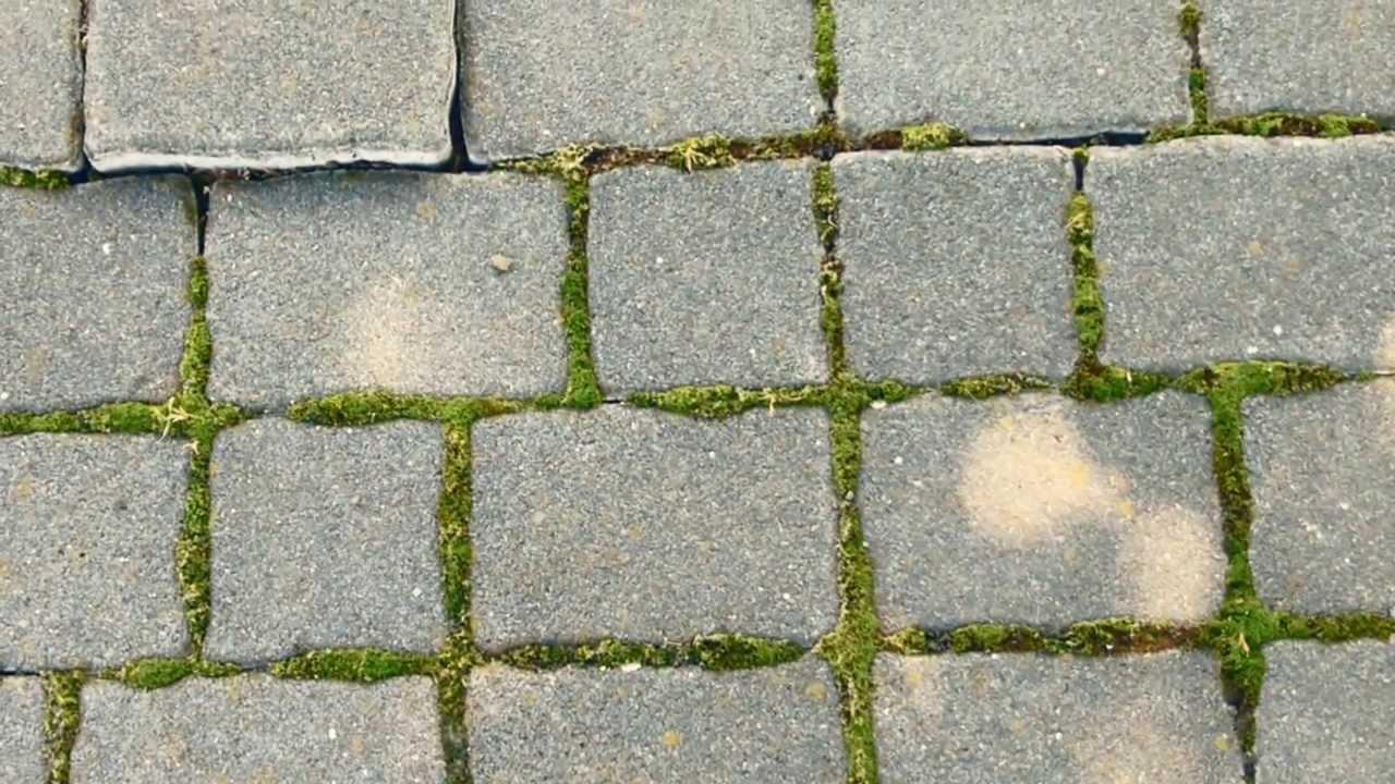 12001 adoquines del piso con musgo efecto calles y for Antorchas para jardin precio