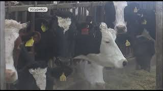 В Приморье проходит кампания по вакцинации сельскохозяйственных животных