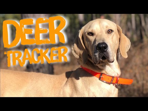 Tracking Deer With A Black Mouth Cur At Hollis Farms