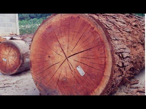 Logistica y transporte de mercancias Completo de YouTube · Duração:  42 minutos 54 segundos