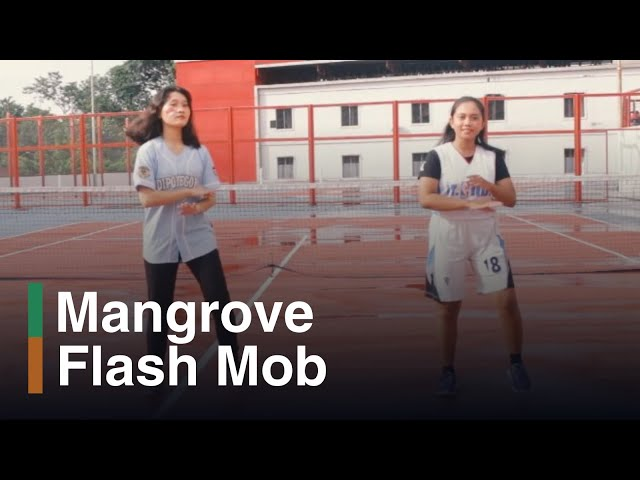 Teaser Flash Mob, Mangres Mangrove Olympic