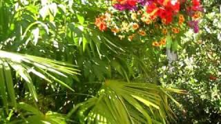Canadian Subtropical Flora in a Warm Summer Breeze