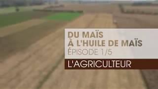 Du maïs à l'huile de germe de maïs : l'agriculteur