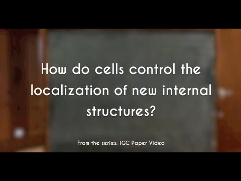 How do cells control the localization of new internal structures? | IGC Paper Video