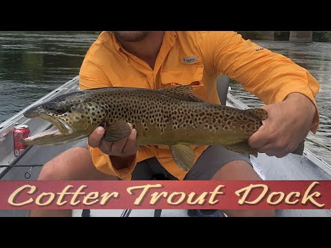 August 5, 2020 Arkansas White River Trout Fishing Report