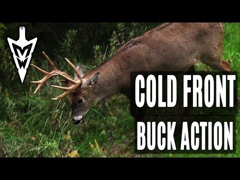 October Cold Fronts, Big Buck Action | Midwest Whitetail