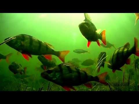 Grand Canal. Slow TV Ireland: 1 hour relaxation underwater footage. Великий Канал. Подводная съёмка.