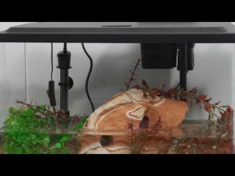 Tetra® Products — 10 Gallon Aquarium Kit Setup