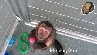 Monkey Easter Egg Hunt!