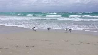 видео Отдых на Кубе в марте
