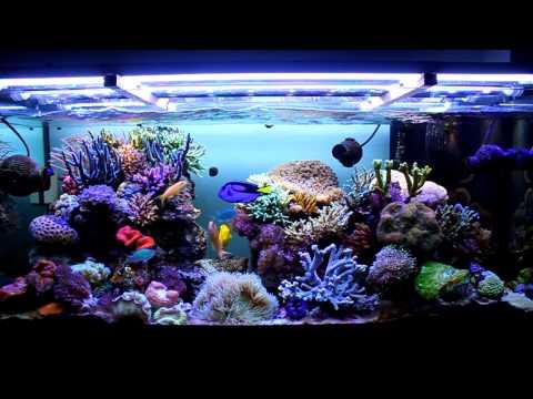 Danireef presenta acquario marino alba e tramonto for Acquario 120 litri