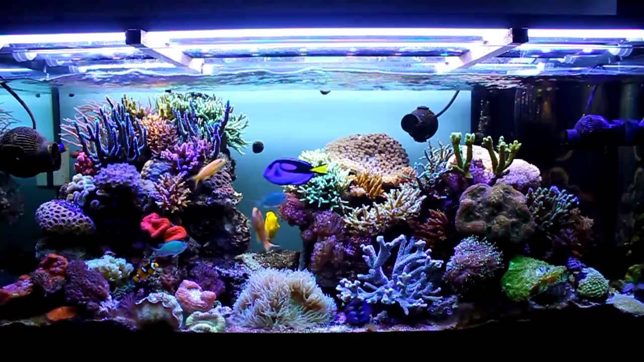 Acquario marino 350 litri youtube for Acqua acquario