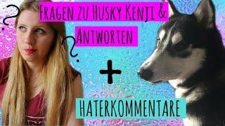 Ich quäle meinen Husky?! I FRAGEN zu meinem Hund + HATERKOMMENTARE I KENJI ☆I ellylicious♡