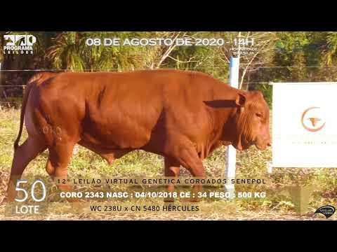 LOTE 50 CORO 2343