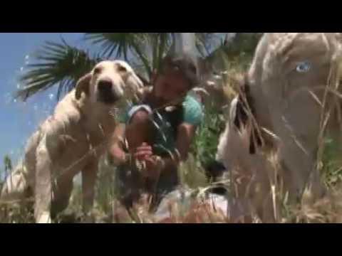 Köpek Besleyen Gençlere Saldırdılar