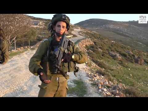 Israeli soldiers attack, arrest B'Tselem volunteer