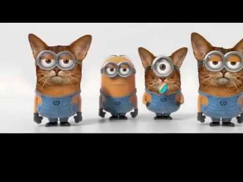 Minion Banana Song With (Cat Edition)